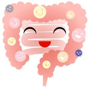 食物繊維は腸内細菌の中でも善玉菌の栄養になります