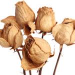 甘い飲み物の摂り過ぎは老化と疲れと悪玉菌を増やす原因!