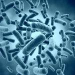 長生きの秘訣は食文化と腸内細菌にアリ!!