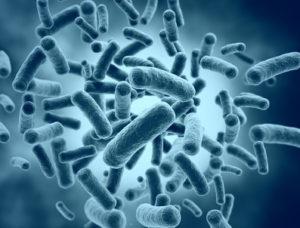 肥満のマウスにはファーミキューテス類が多く、バクテロイデーテス類が少ない
