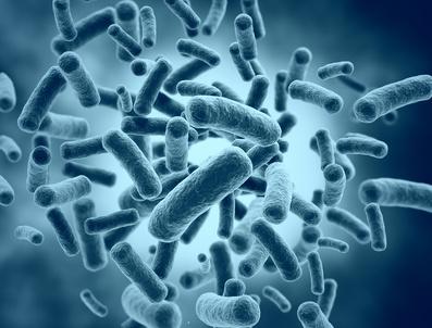 腸内細菌はどのくらいの期間、腸に生息している