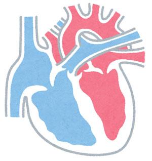 心臓の拍動数は、安静時に1分間に約70回です