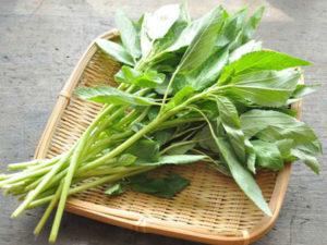 免疫力を高める食べ方や食べ物のヒント~野菜を葉ごと皮ごと根ごとまるごと食べる