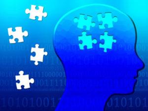 脳内の海馬の役割は記憶を保存することです