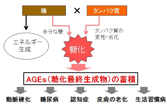 AGES(糖化最終生成物)による糖化の仕組み