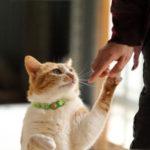 ペット用のヘルスケアにも乳酸菌が注目されている理由は?