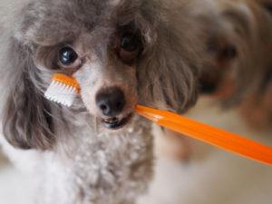 乳酸菌はペットの腸内環境を改善し、免疫力を高めてくれます。 また、口内のトラブル予防や歯周病などにも有効です