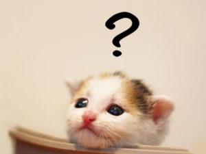 ペット用にはどんな乳酸菌サプリがおすすめ?