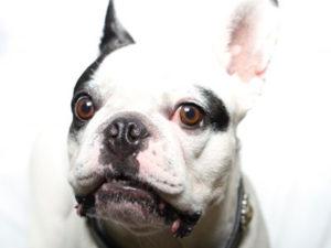韓国の人気アイドルの飼い犬に噛まれ女性が敗血症で死亡