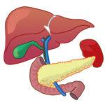 便秘による腸内環境の悪化は肝臓の解毒機能を低下させる原因