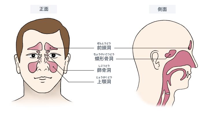 鼻腔や副鼻腔は、季節や外気温に関係なく体に入る空気を約37℃での適温、湿度100パーセントに調整してくれる役割を持っています