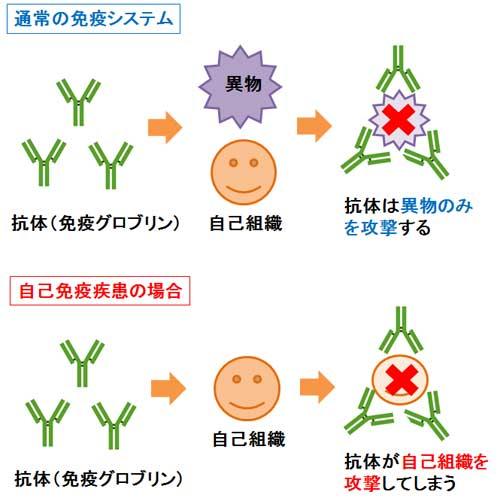 自己免疫疾患が問題なのは、本来無害な自己組織にまで過剰に免疫が異常反応してしまうこと