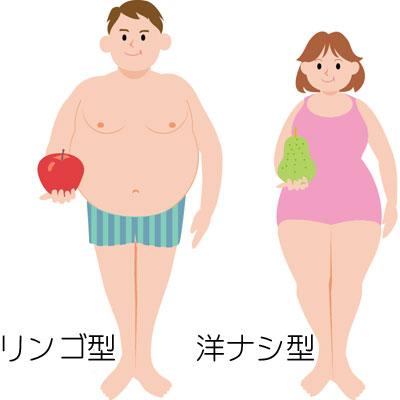 肥満体型は「リンゴ型」と「洋ナシ型」の2種類