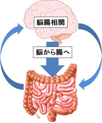 脳から腸への脳腸相関