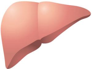肝臓に脂肪が異常に蓄積した状態が「脂肪肝」