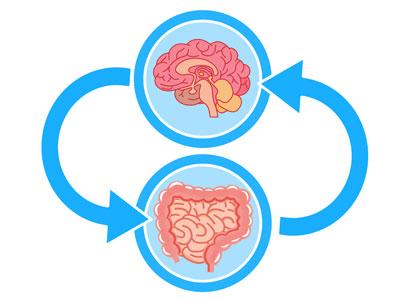 脳腸相関 脳と腸はつながっている