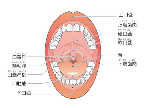 口腔がんの種類