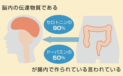 セロトニンの90%は小腸に存在している