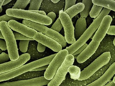 腸内フローラの衰退は、善玉菌の減少を意味する